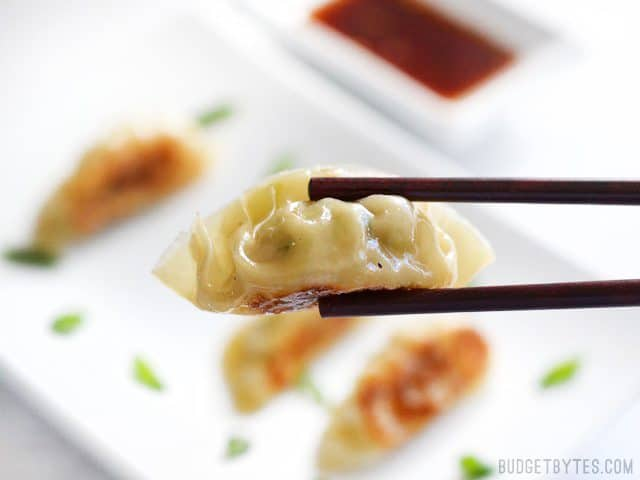 Close up of one cooked pork gyoza being held with chopsticks, the plate of gyoza in the background